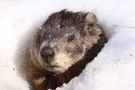 Is it Groundhog Day in your Boardroom?